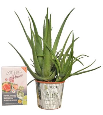 Pianta Aloe Vera + concime