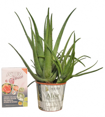 Vendita Pianta Aloe Vera Barbadensis con concime Bio