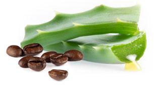 Vendita Liquore all'Aloe e caffè